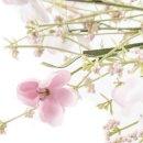 Deko-Feldblume Blümchen rosa im 3er Set