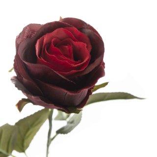 Rose bordeaux