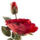 Rose mit 2 Blüten rot