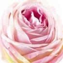 Kunst-Blume Rose mit großen Blütenkopf zartrosa/grün