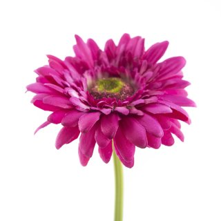 Kunst-Blume Gerbera violett