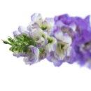 Kunst-Blume Delphinium/Rittersporn flieder