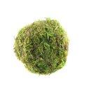 Moos-Bälle Ball 12 Stück ca. 5 cm