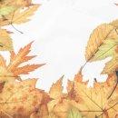 Tischläufer im Herbst-Design mit Blätter-Motiv