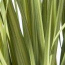Gras im Topf , verschiedene Größen