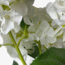 Deko Hortensie im Topf weiß