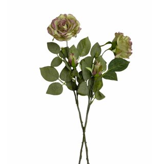 Rosen im 2er Set grün/pink
