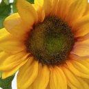 Kunstblume Sonnenblume ca. 67 cm